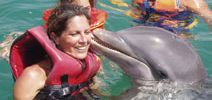 Swim with dolphins in Varadero
